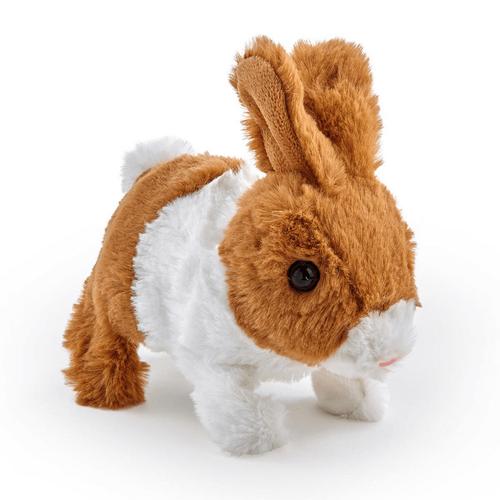 สัตว์เลี้ยง พิตเตอร์แพตเตอร์ กระต่ายสีน้ำตาล-ขาว