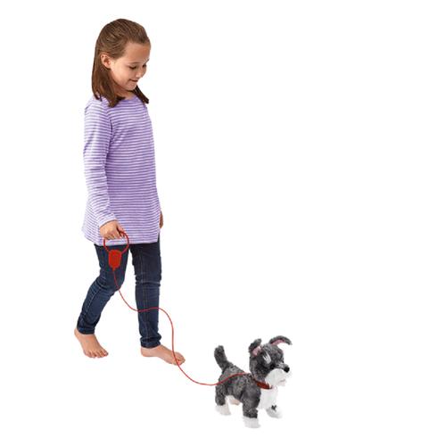 สัตว์เลี้ยง พิตเตอร์แพตเตอร์ ลูกสุนัขสีเทา-ขาวพร้อมสายจูง